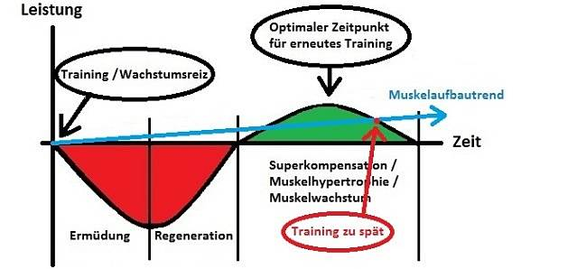 Training zu spaet © MoreMuscles.de