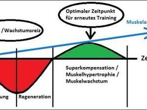 optimale Trainingshaeufigkeit © MoreMuscles.de