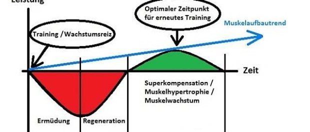 optimale Trainingshaeufigkeit © MoreMuscles.de