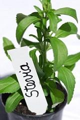 Stevia Pflanze © petrabarz Fotolia.com