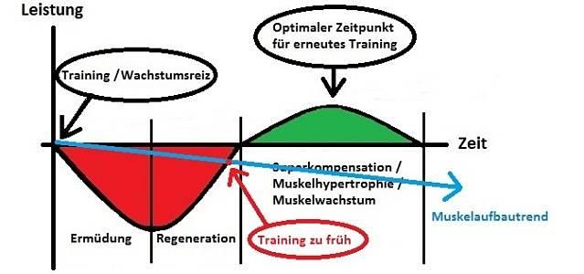 Wie oft einen Muskel in der Woche trainieren? | MM.de