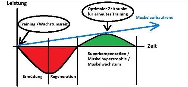 Optimales muskelaufbautraining