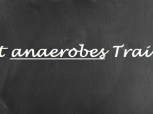 Anaerobes Training