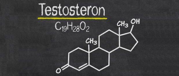 wo wird testosteron gebildet